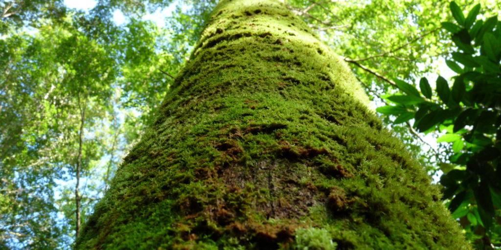 La vie secrète des forêts tropicales